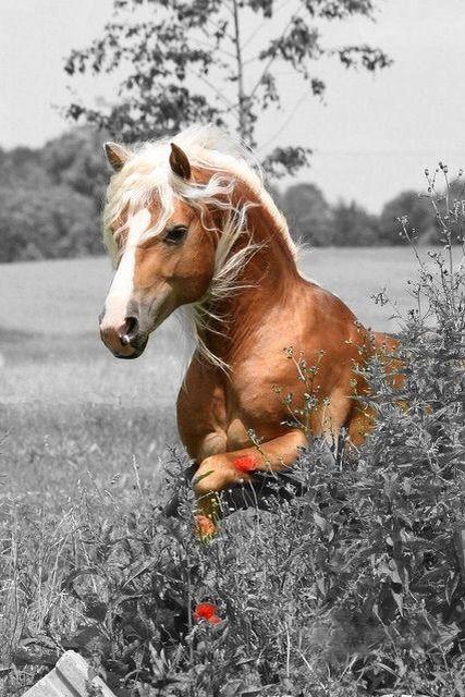 À cheval sur la culture générale !