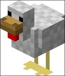 Combien de temps faut-il pour qu'une poule ponde un œuf ?