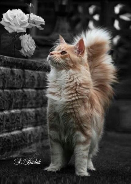 """Qui a écrit le roman """"Le chat"""" ?"""