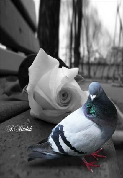 """Quel peintre, né à Malaga, dont l'attrait pour les colombes date de son enfance, a peint une multitude de toiles représentant des pigeons, bien que sa toile la plus connue soit """"Guernica"""" ?"""