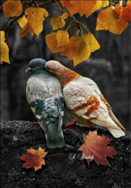 Quelle place italienne est, depuis toujours, envahie de pigeons ?
