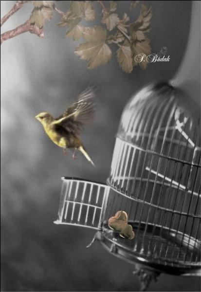 """Qui chantait """"Ouvrez ouvrez la cage aux oiseaux, regardez-les s'envoler c'est beau"""" ?"""