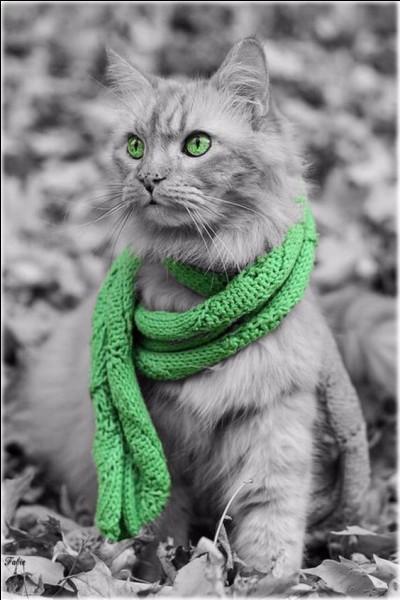 """Qui a écrit """"Les contes du chat perché"""" ?"""