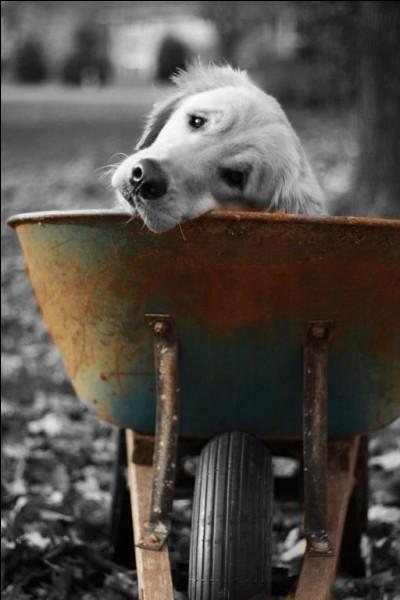 """On a grandi un peu, et on lit """"le club des cinq"""", quel était le nom de leur inséparable chien ?"""