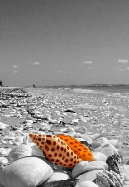 """Qui chantait """"Sur la plage abandonnée, coquillages et crustacés"""" ?"""