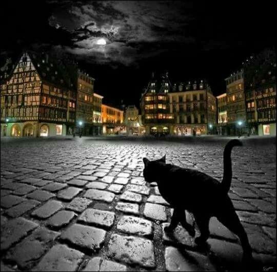 """Rodolphe Salis est lié au célèbre cabaret du Chat noir, qui réunissait le """"Tout Paris"""" à Montmartre, à la fin du 19e siècle, mais qui est-il ?"""