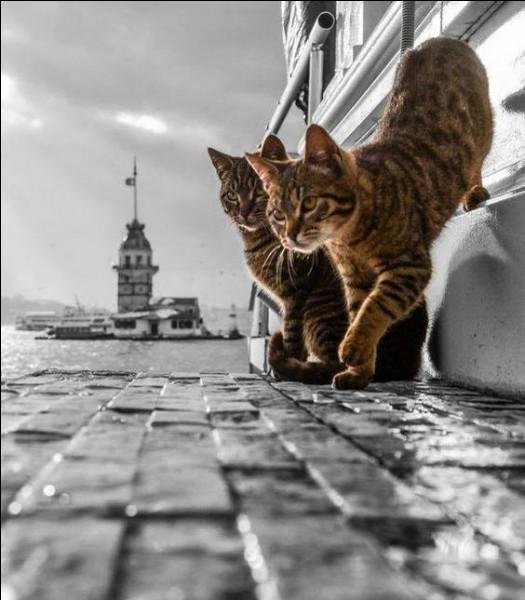 Où se cache le chat chez Garou ?
