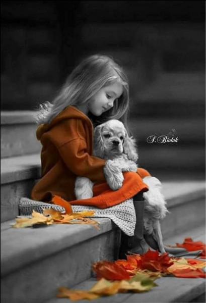 Ne comptez pas sur l'image, mais seulement sur votre mémoire pour trouver la réponse. Vous connaissez tous la chienne Lassie ! De quelle race est-elle ?