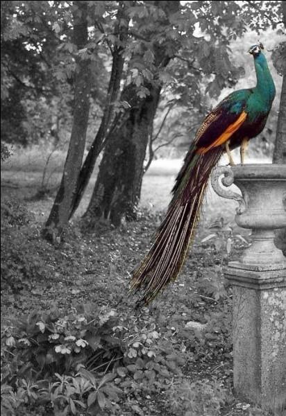 Quel oiseau est paré des plumes du paon dans le titre d'une fable de La Fontaine ?