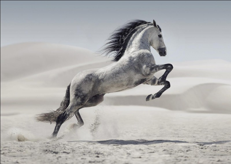 Comment dit-on ''cheval'' ?