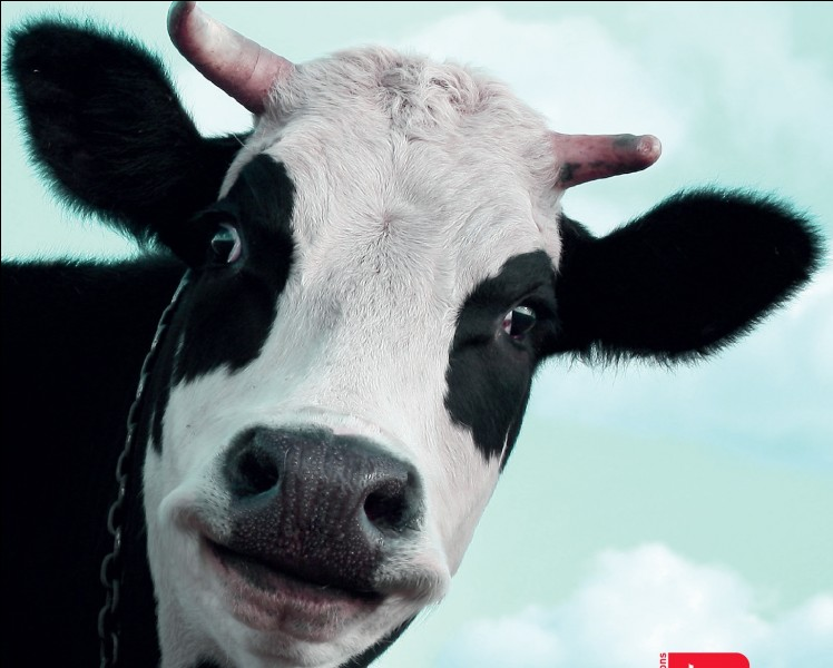 "Comment dit-on ""vache"" en anglais ?"