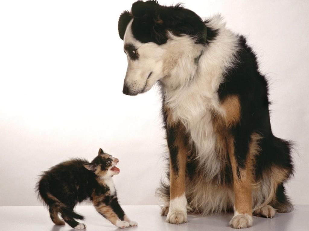 Es-tu plutôt chien ou chat ?