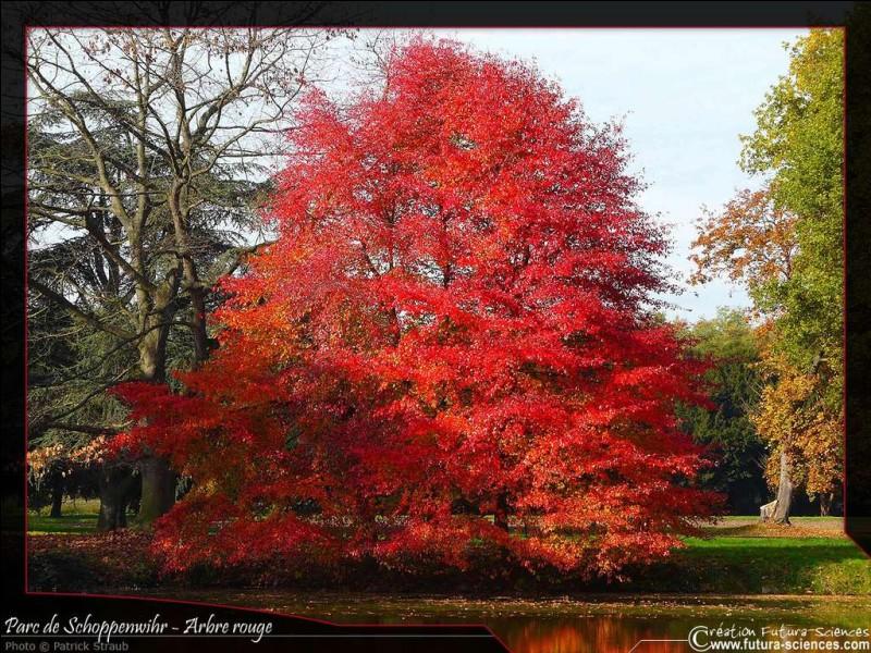 Celui-là revêt une belle couleur d'automne :