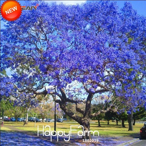 Cet arbre est d'une couleur rare !