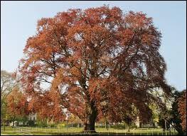 De quelle couleur est cet arbre ?