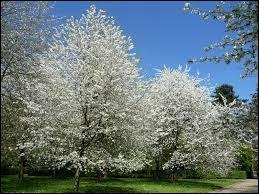 Celui-ci a les couleurs du printemps !