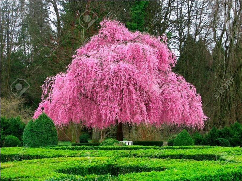 Magnifique couleur pour cet arbre !