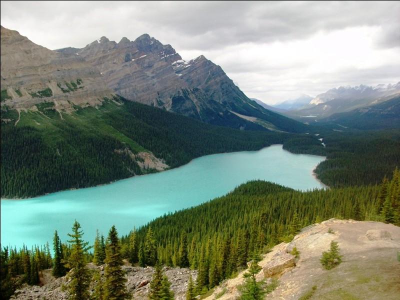 Quelle chaîne de montagnes s'étend sur environ 4 800 kilomètres du nord au sud à l'ouest du Canada et des États-Unis et abrite entre autres les monts Robson et Elbert ?