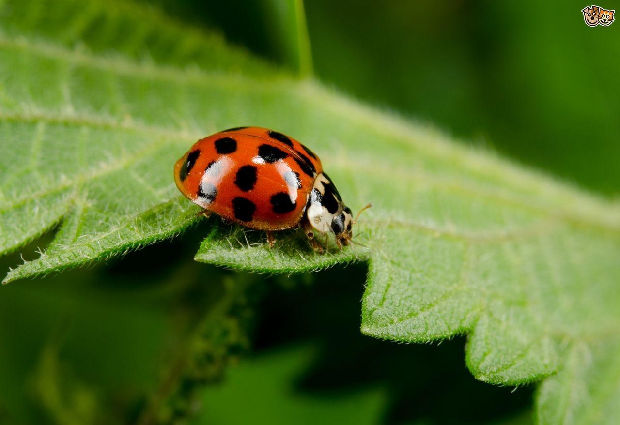 Quel insecte es-tu ?