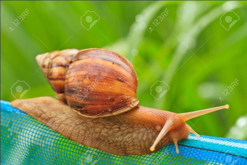 L'escargot terrestre peut être carnivore !