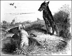 Que convoite le loup ?