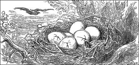 Sans cesse, il fracasse les œufs de l'aigle qui avait dévoré Jean lapin.