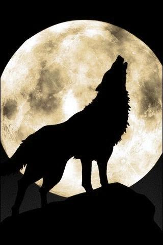 Comment voudrais-tu t'appeler si tu étais un loup ?
