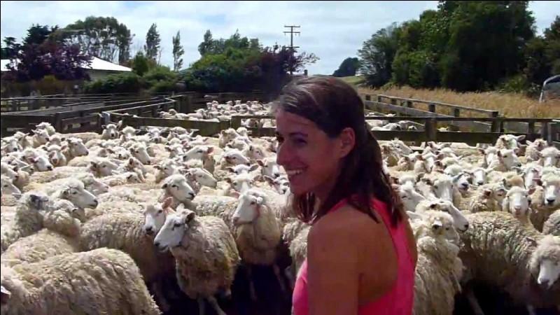 Chez moi, les moutons sont plus nombreux que les humains !