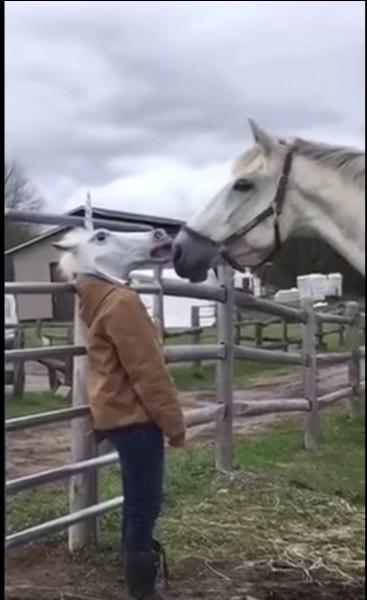 Tu fais ta séance et soudain ton cheval prend peur ! Que faire ?