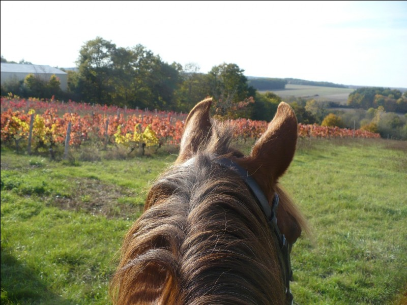 Tu pars en balade seul(e), tu tombes et ton cheval refuse que tu l'attrapes mais reste à proximité. Que fais-tu ?