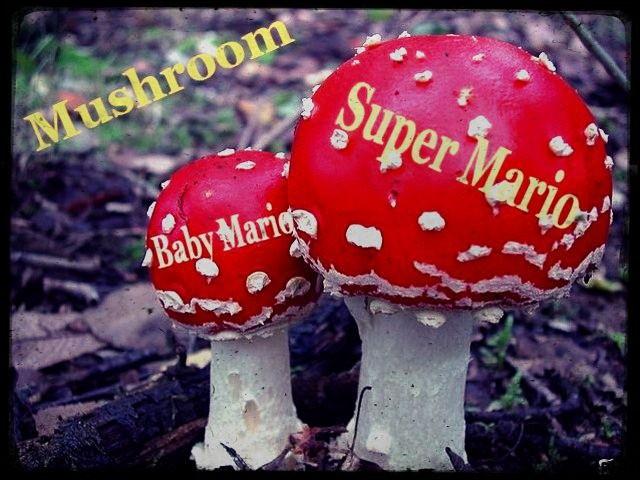 """Parlons d'un jeu vidéo très connu. Dans """"Super Mario"""", que se passe-t-il quand bébé Mario avale un de ces champignons ?"""