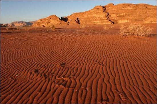 Quelle race de chien donne son nom à un désert ?