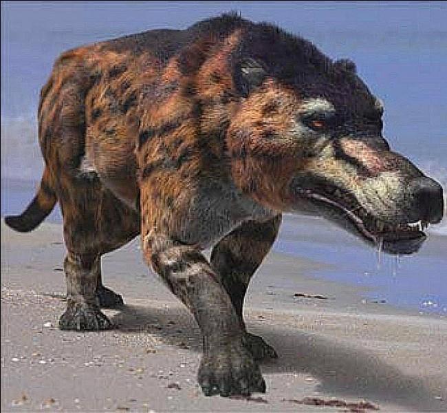 Dans quel désert a été découvert le crâne d'un Andrewsarchus, plus gros mammifère carnivore ayant existé ?