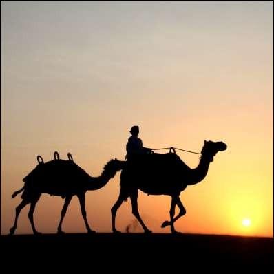 Comment appelle-t-on une randonnée dans le désert à dos de chameau ?