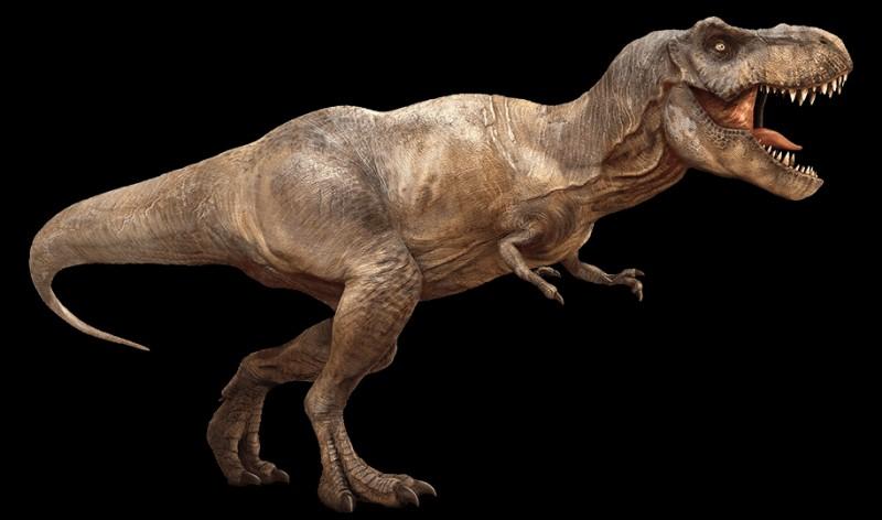 À dix ans, quelle taille fait le Tyrannosaure ?