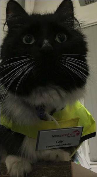 Felix, chat femelle, a été la star de la gare de Huddersfield, en Angleterre. Quelle en est la raison ?