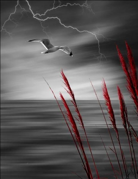 """Qui chantait """"Cette année-là, dans le ciel passait une musique, un oiseau qu'on appelait Spoutnik..."""" ?"""
