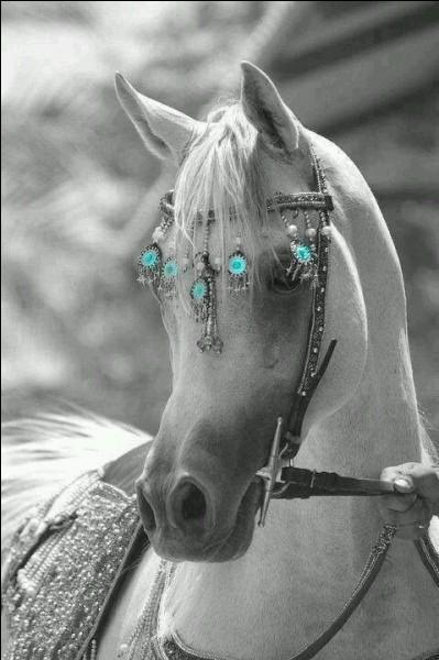 """Quel cheval blanc célèbre fut engagé au """"Grand Prix de Saint-Paul"""" ?"""