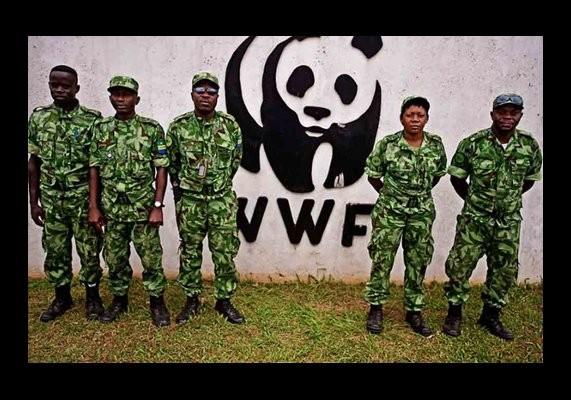 Depuis des lustres, on chasse, moleste et tue les Pygmées bakas, bayakas (et une douzaine d'autres peuples) des forêts équatoriales du bassin du Congo. Qui sont les coupables et pourquoi font-ils cela ?