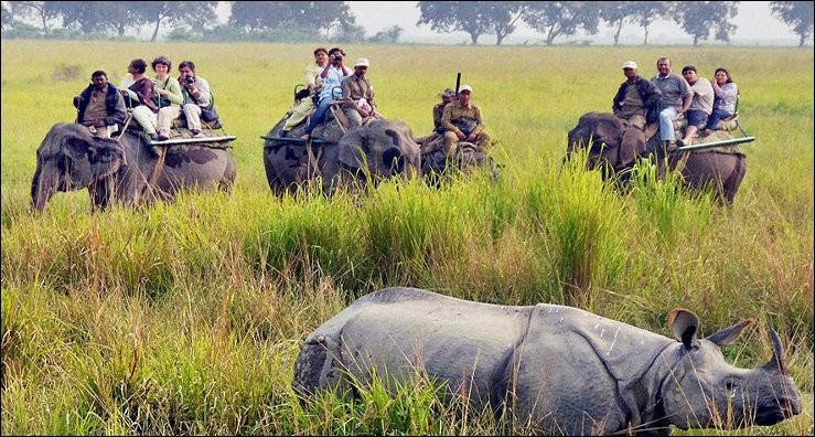 Dans l'État d'Assam en Inde, le parc du Kaziranga est protégé. Que pouvez-vous y faire si vous êtes natif du coin ?