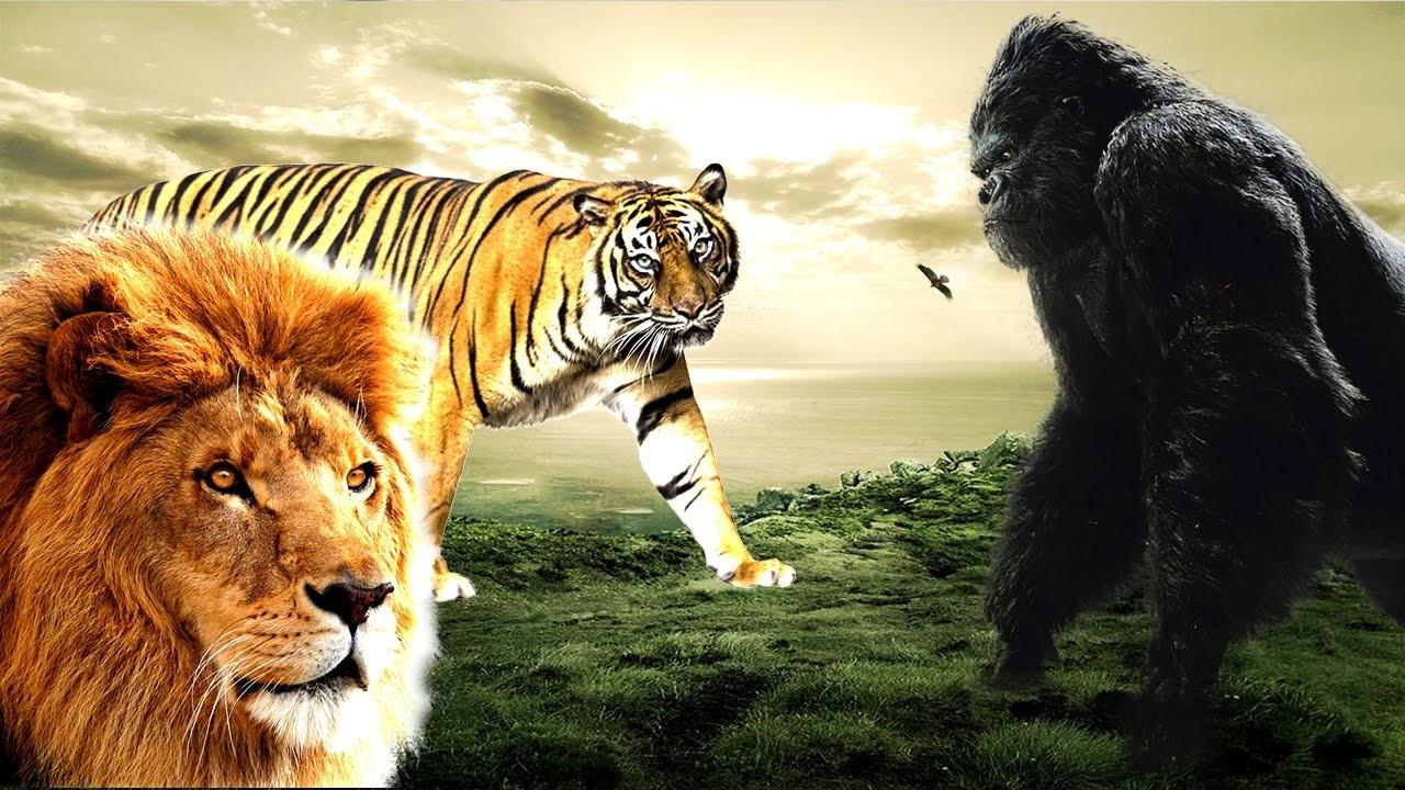 Des films avec des animaux !