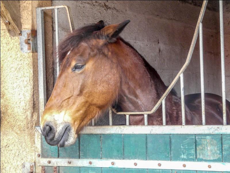 Pourquoi ce cheval a-t-il les oreilles plaquées en arrière ?