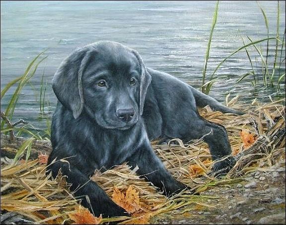 Comment s'appelait la chienne labrador noire de François Mitterrand ?