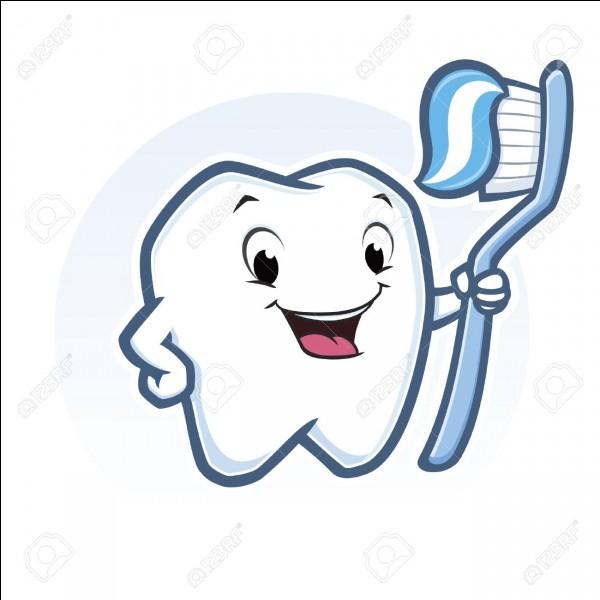 Quelles dents sont situées entre les incisives et les prémolaires ?