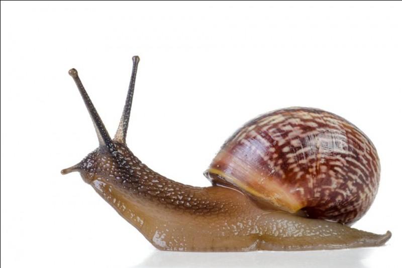 Quel est le nom de l'élevage d'escargots ?