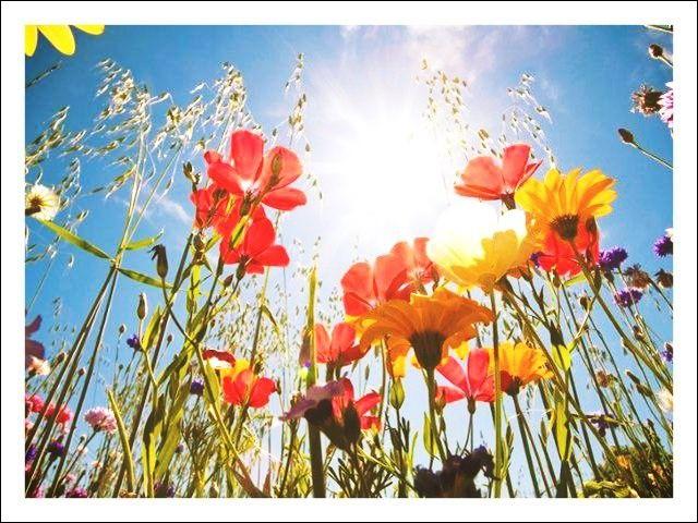 Et pour clore ce quiz, comment appelle-t-on ce qui désigne la culture des fleurs ?