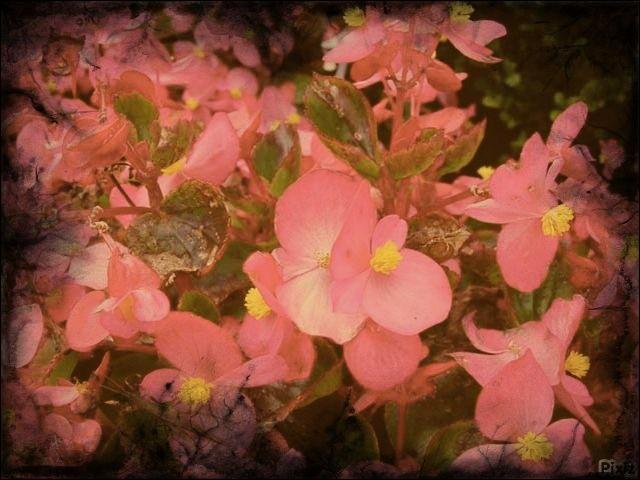 Combien de bégonias le tapis de fleurs à Bruxelles compte-t-il ?