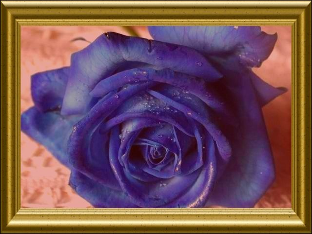 En général, une rose bleue représente...