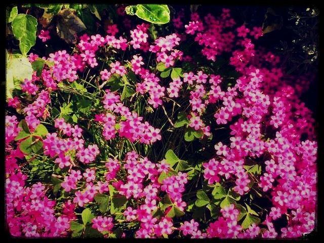 Un peu de savoir sur les fleurs (2)