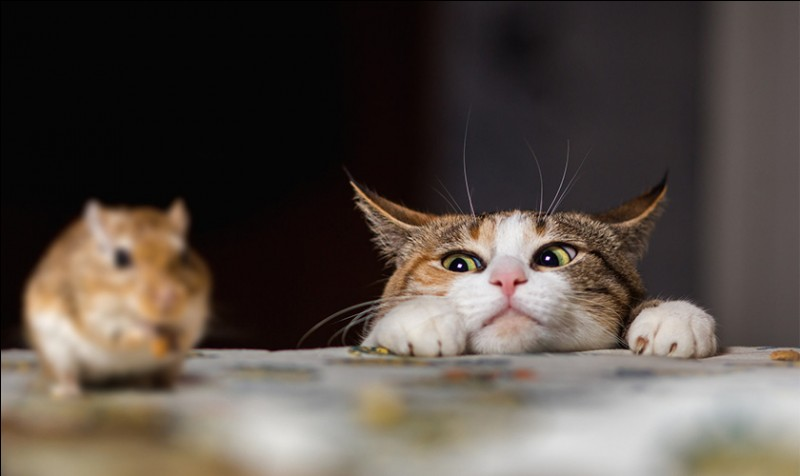 Transformation ! En chat ! Imagine ! Tu es un chat, tu rentres d'une journée épuisante de chasse ! Il reste quelques proies, que fais-tu ?